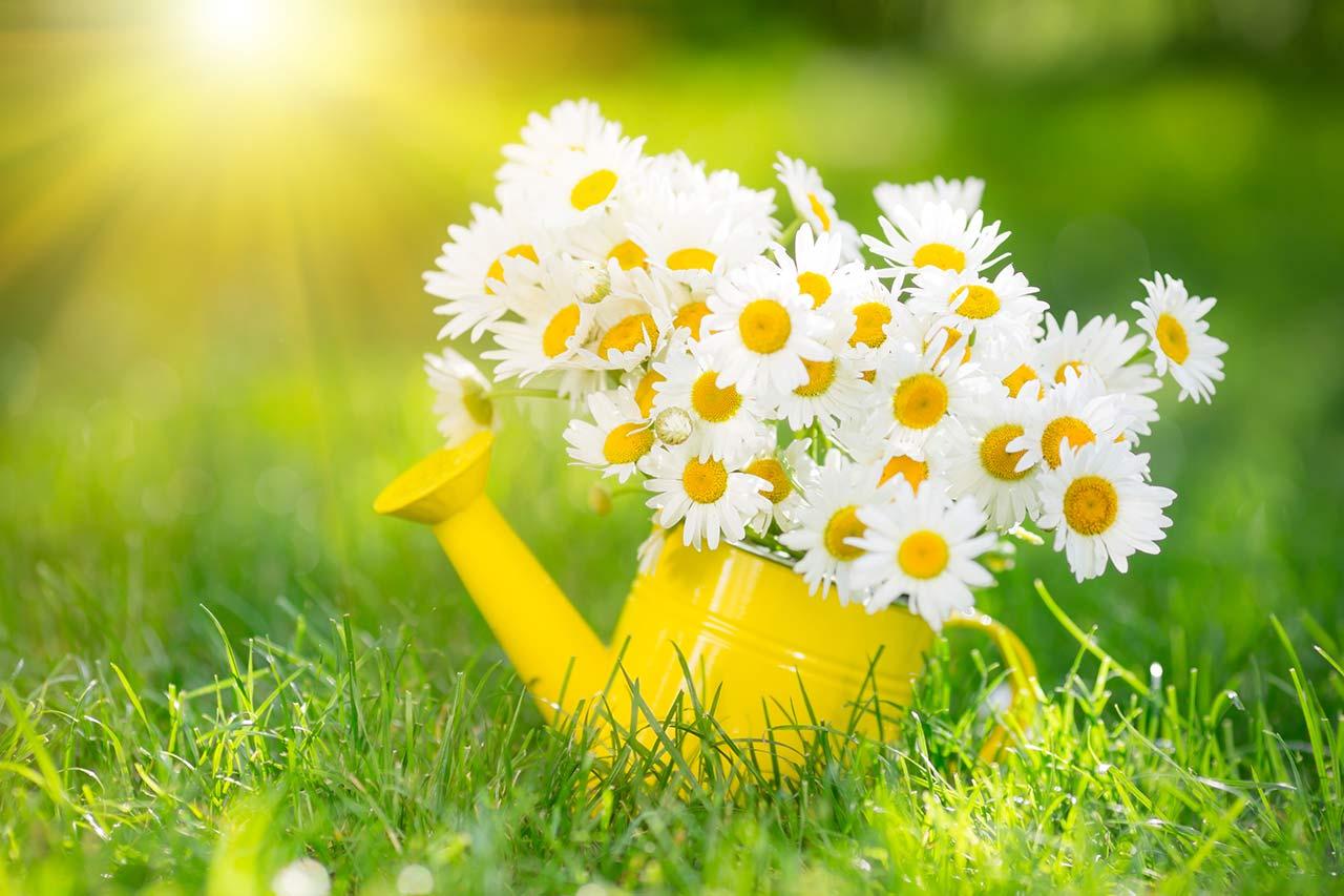 Frühjahrsputz, Frühlingsputz, Checkliste