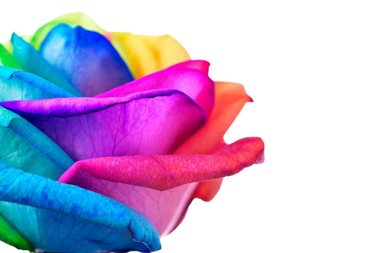 Regenbogen-Rosen selber machen, DIY Anleitung