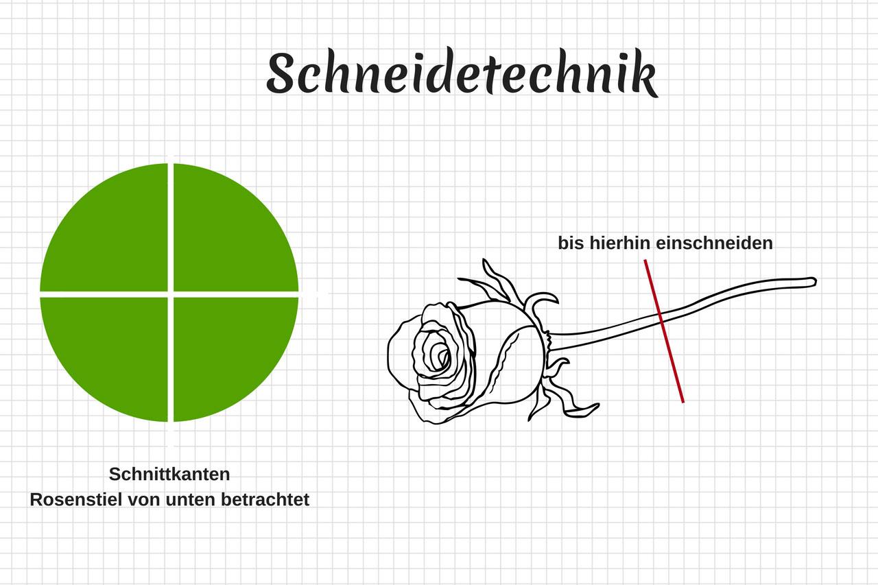 Schneidetechnik, DIY Anleitung, Rosen färben, Regenbogen-Rosen